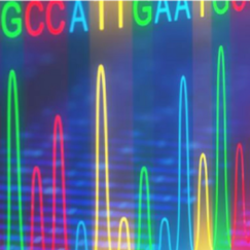 Image of a Sanger Sequencing analyzing data