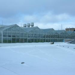 Image of the Phytotron greenhouse during the day in the winter (snow is visible)