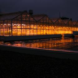 Image of the Phytotron greenhouse at night