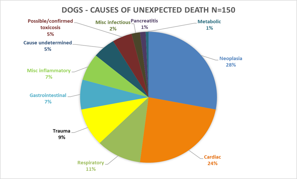 Unexpected Death cats and dogs