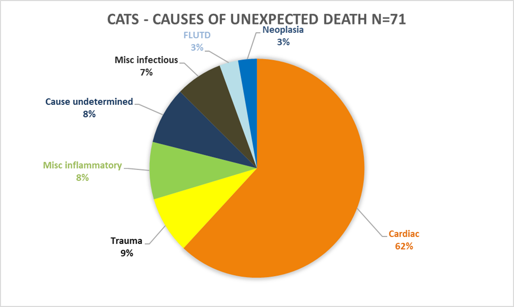 Unexpected Death in Cats