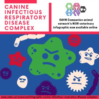 Canine Infectious reespiratory disease complex icon