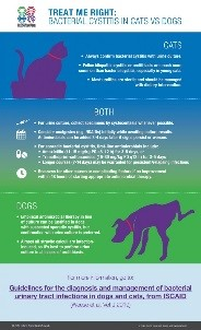 infographic on cat cystitis