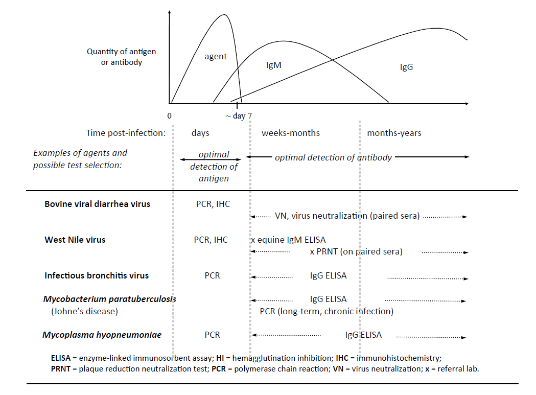 a graphical overview of the usual course of an infectious disease, which gives some insight into test selection