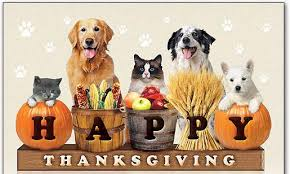 Dogs and cats with happy thanksgiving pumpkins