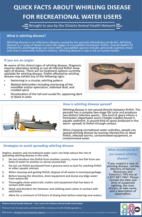 Whirling disease fact sheet