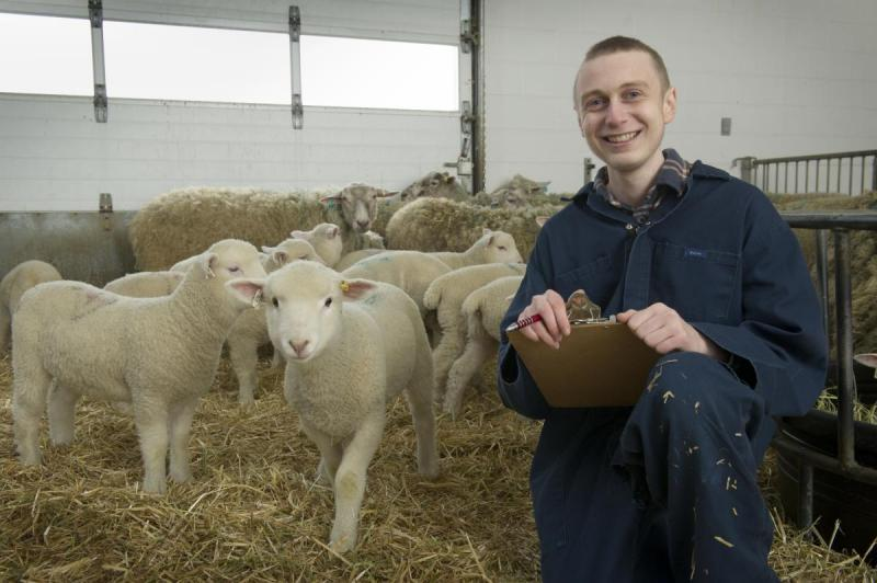 Student holds clipboard and poses with a flock of sheep in a research station