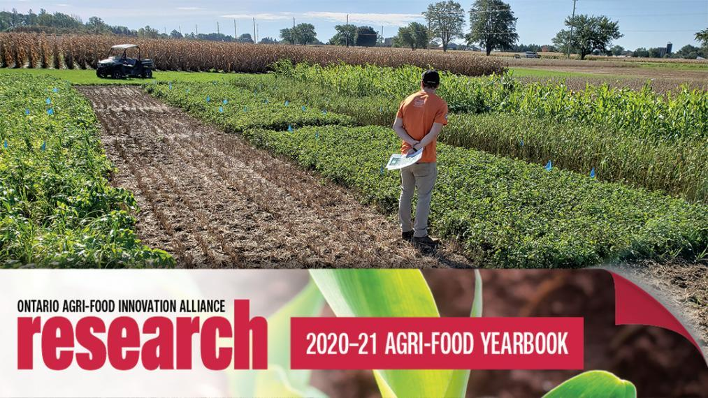 Student Matt Stewart standing in field looking out at it with a banner at the bottom of the photo that says Ontario Agri-Food Innovation Alliance Research 2020-21 Yearbook