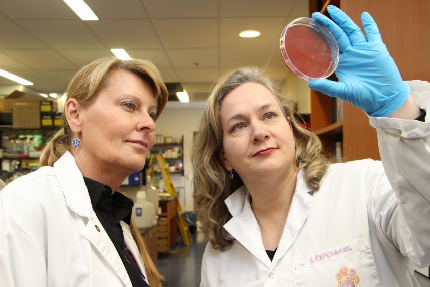 Bonnie Mallard and Lauri Wagter-Lesperance look at a petri dish