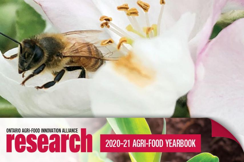 A bee sitting on a white flower with a banner icon at the bottom that says Ontario Agri-Food Alliance Research 2020-21 Yearbook.