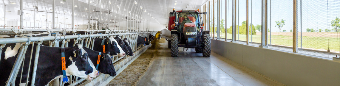 Tractor driving past cows in the dairy barn