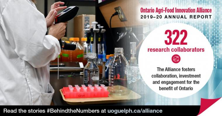 """Person in a lab, wearing a lab coat, using a small screen. She has a table of samples in front of her. The accompanying text reads Ontario Agri-Food Innovation Alliance 2019-20 Annual Report. """"322 research collaborators: The Alliance fosters collaboration, investment and engagement for the benefit of Ontario."""" Read the stories #BehindtheNumbers at uoguelph.ca/alliance."""