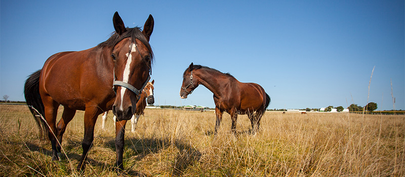 Two horses in field at Arkell Equine facility