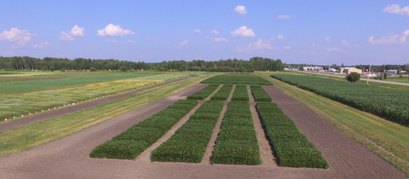 image of crop plots at Emo Research Station