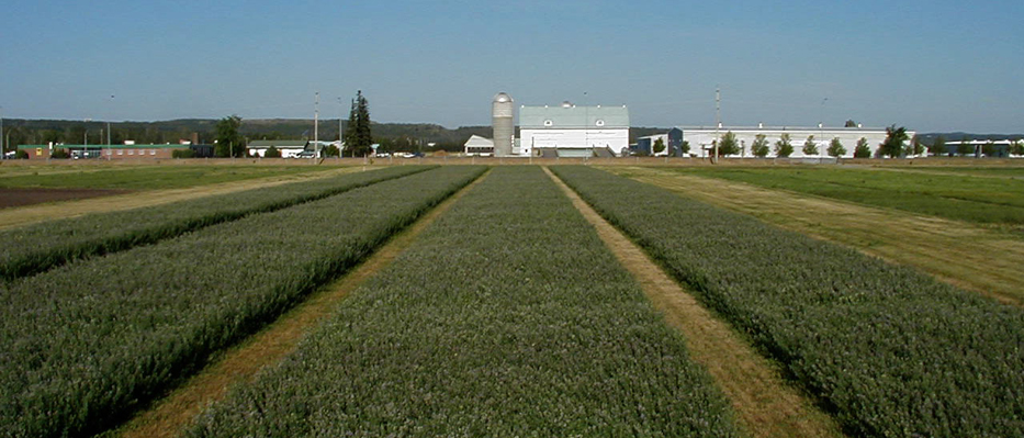 Image of crop fields at New Liskeard Research Station