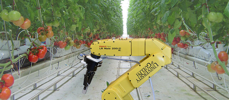 Robot with tomatoes in a greenhouse