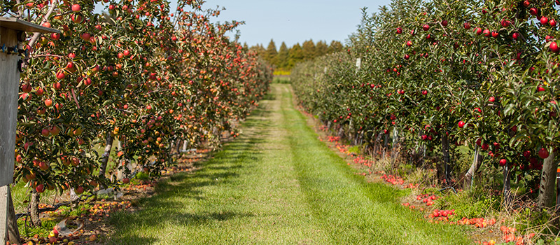 Image of tender fruit tree orchard