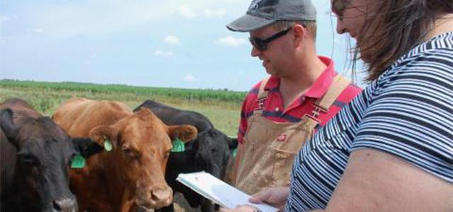 Man and woman with notebook in front of 3 beef cows