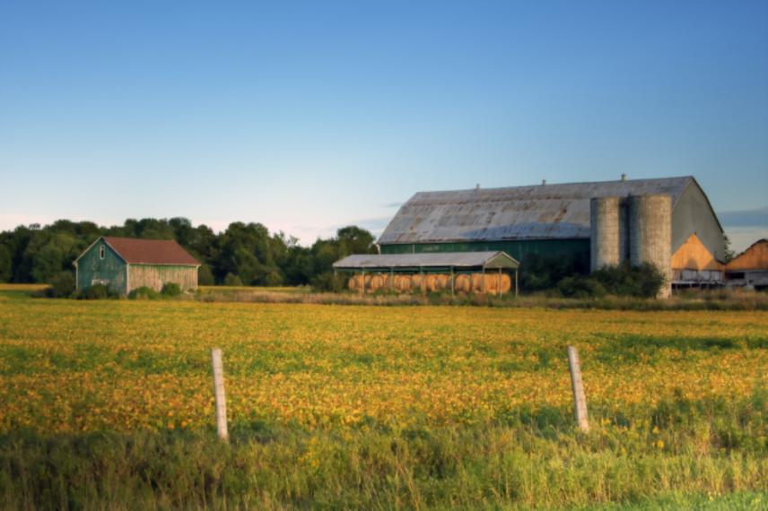 Barn in a farm field