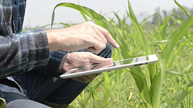 Man using an ipad in a field