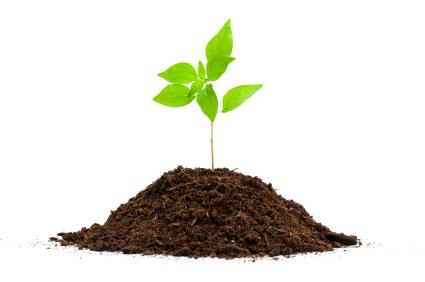 Image of a plant growing out of a small pile of soil
