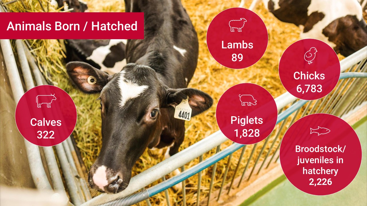 Animals born/hatched: 322 calves, 89 lambs, 1,828 piglets, 6,783 chicks, 2,226 fish broodstock/ juveniles in hatchery