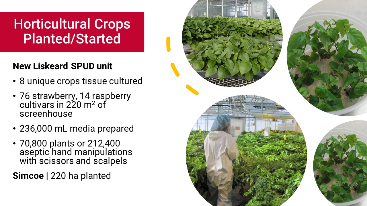 Horitcultural Crops Planted/Started: New Liskeard SPUD Unit: 8 unique crops tissue cultured; 76 strawberry, 14 raspberry culaivars in 220 metres squared of screenhouse; 236,000 mL media prepared; 70,800 plants or 212,400 aseptic hand manipulations with scissors and scalpels. Simcoe: 220 ha planted