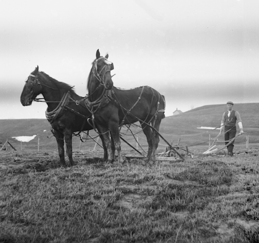 horses and man plowing