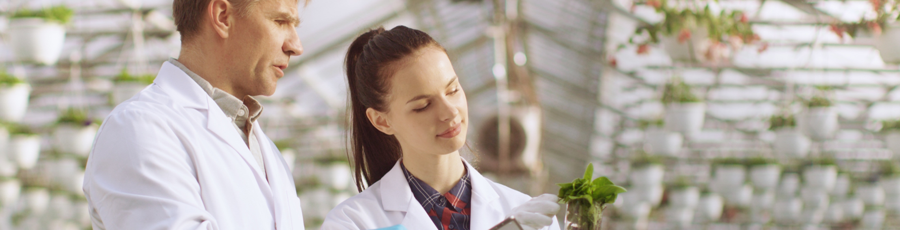 Two people in lab coats examining a plant
