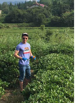 Faller collecting tea leaves in China for analysis
