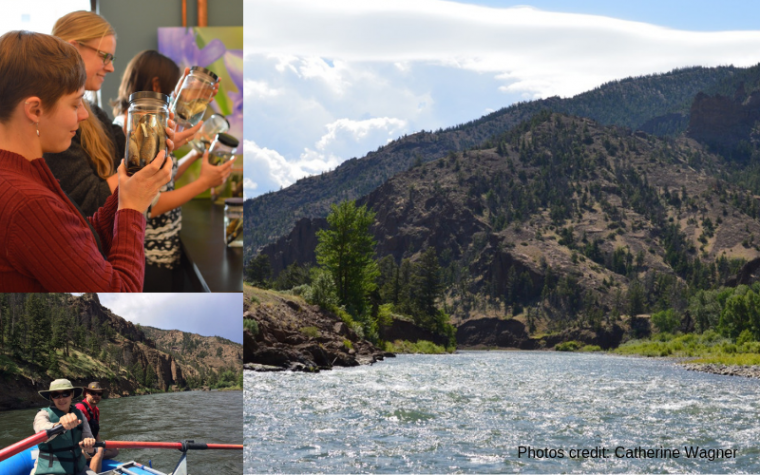 Photo collage featuring Dr. Elizabeth Mandeville at the University of Wyoming and in nature. Photo credit Catherine Wagner.