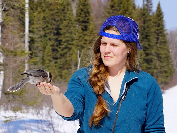 PhD candidate Koley Freeman hand feeds a Canada Jay in Algonquin Provincial Park (photo by A. Newman)