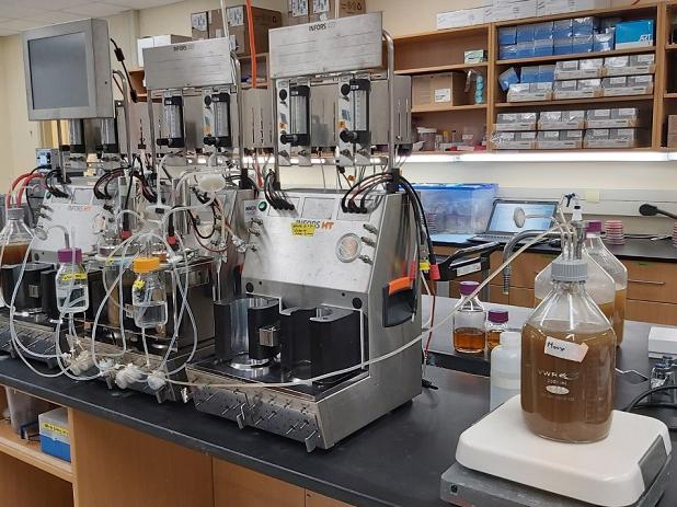 Bioreactors used to culture gut microbes in the Allen-Vercoe lab (photo by S. Rosiana)