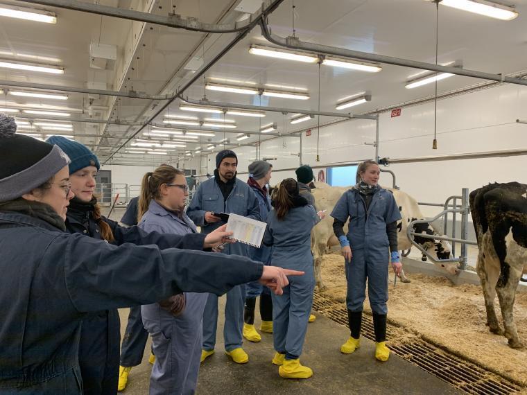 Veterinary students in dairy barn