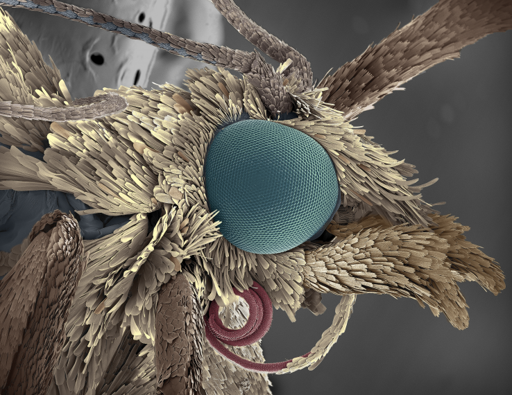 Close-up image of a moth's eye
