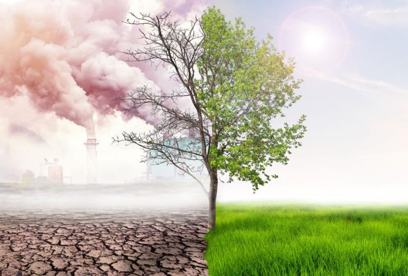 Image of greenery being destroyed by global warming.