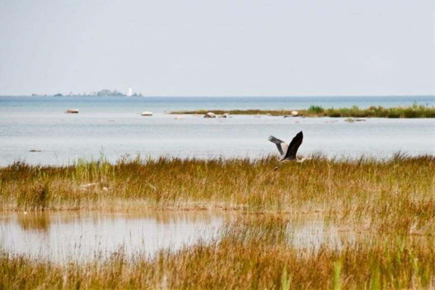 Image showing Lake Huron with grass and a heron flying past.