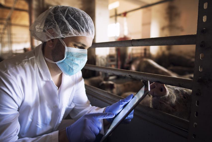 Image of person in barn in protective equipment using iPad with pigs in background
