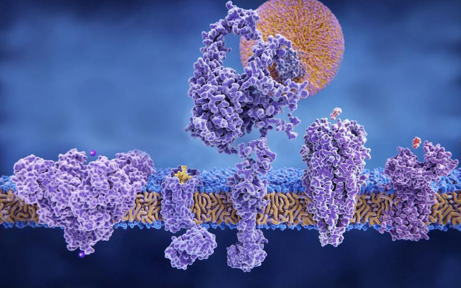 Image of a cell membrane with embedded proteins