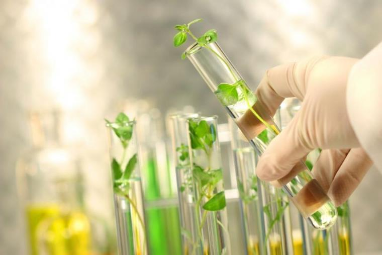 Hand holding a test tube that has plants growing inside. Background shows additional test tubes with plants growing inside them.