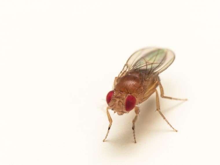 Fruit flies are able to reliably distinguish between individuals based on sight alone.