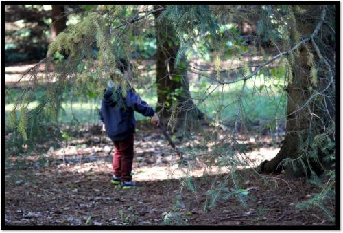 Child exploring in forest with stick