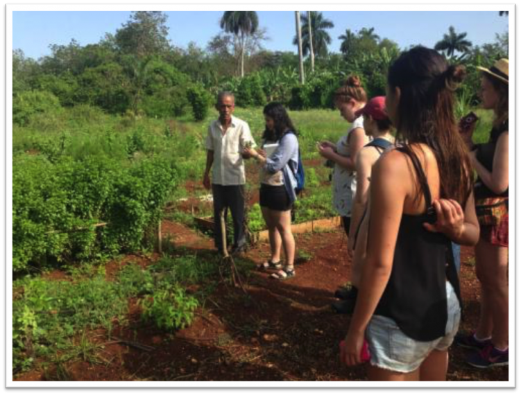 Students looking at a farm in Cuba