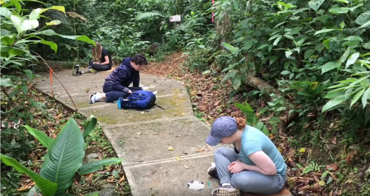 University Guelph students studying insects in Costa Rica as part of field course.