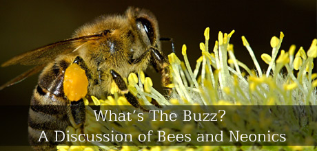 What's The Buzz? A Discussion of Bees and Neonics
