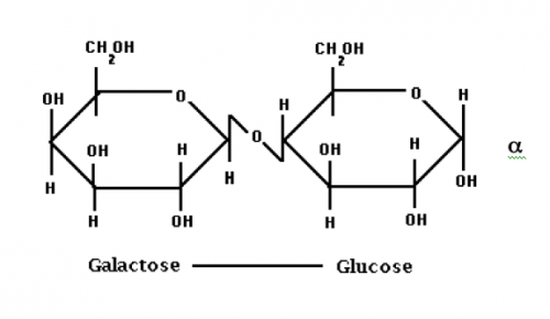 Structure showing the glucose and galactose of lactose