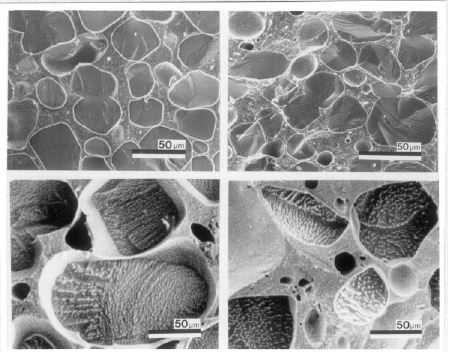 cryo-scanning electron micrographic images of ice cream after temperature fluctuations