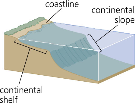 Continental shelf for Define abyssal plain