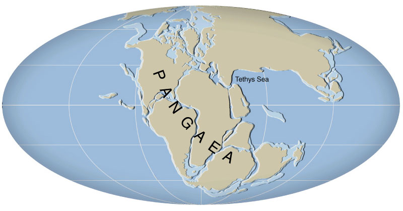 pangea supercontinent Pangea was a supercontinent that existed during the late paleozoic and early mesozoic eras a representation of what pangea may have looked like pangea was a supercontinent that existed between 270 to 200 million years ago 200 million years ago, the movement of the earth's tectonic plates caused .