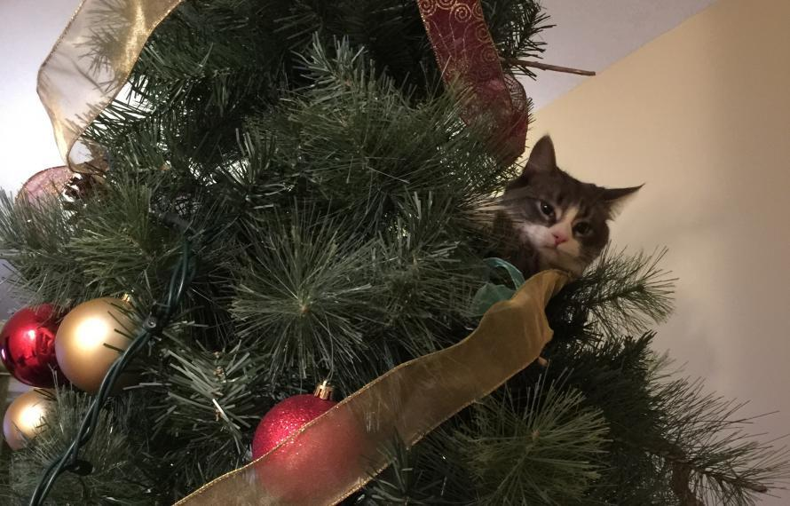 A photograph of Millie the cat in a Christmas tree